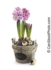 Easter concept : hyacinth flowers with quail eggs