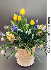 Easter decor of spring flowers. Yellow tulips, hyacinths, blue muscari grow in pot on grey background. Holiday