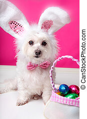 Easter dog with bunny ears and eggs - A dog wearing bunny...