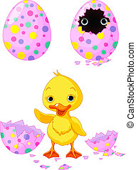 Easter duckling born from an egg