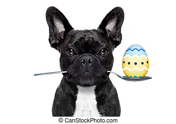 easter egg  dog