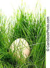easter egg in the green spring grass