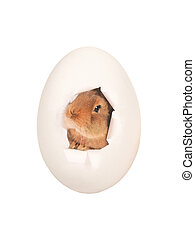 Easter egg with the image of a brown rabbit isolated on a white background.