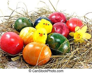 Easter eggs & chicks