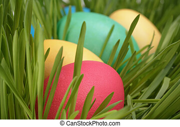 Easter eggs in a row on the grass