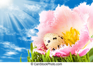 Easter eggs in flower of pink tulip under a bright blue sky