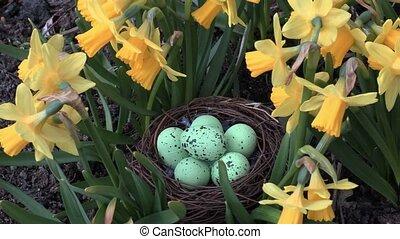 Easter eggs in nest near flowers