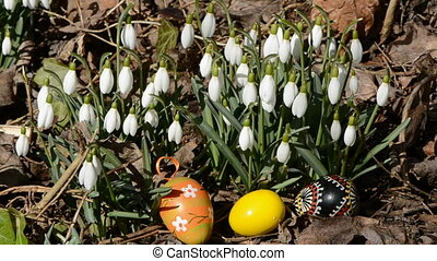 easter eggs in the snowdrops