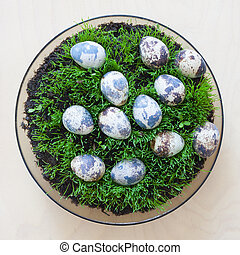 Easter eggs on grass, plywood background