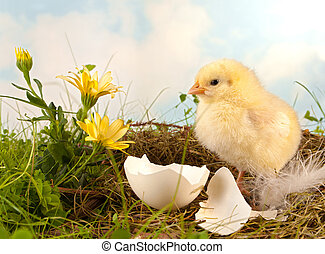 Easter flowers and chick