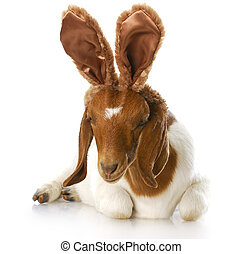 goat wearing bunny ears with reflection on white background
