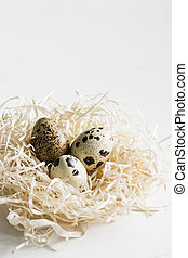 Easter greeting card Quail eggs in hay nest on white wooden background.