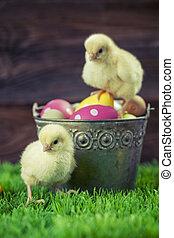 easter ikra, tele, vödör, csirke
