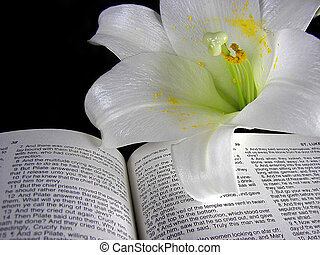 Easter lily on Holy Bible - Close up of an Easter lily on a...