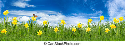 easter meadow with daffodils in front of blue sky
