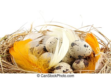 Easter quail eggs in the nest with feathers isolated