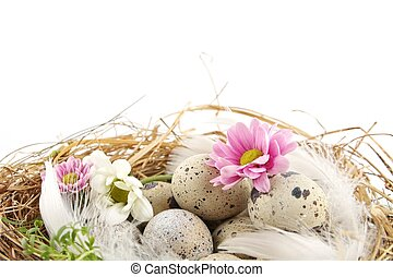 Easter quail eggs in the nest with flowers isolated