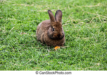 easter rabbit bunny with carrot