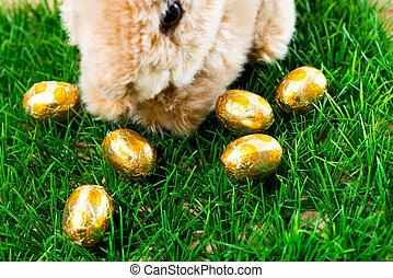 Easter rabbit on spring