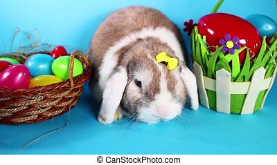 Easter rabbit pet lop bunny on blue screen. easter eggs.