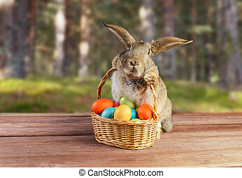 Easter rabbit sits with basket outdoor - Easter rabbit sits ...