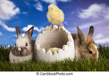 Easter, rabbits and chick - Easter- the Sunday in March or...