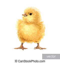 Easter realistic little chicken illustration. Vector.