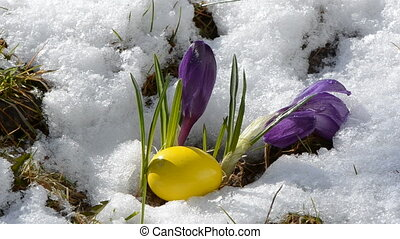 easter time in the north country