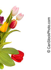 Easter tulips border - Bouquet Easter tulips as a border, ...