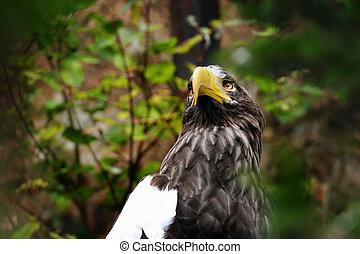 Eastern eagle sitting on tree