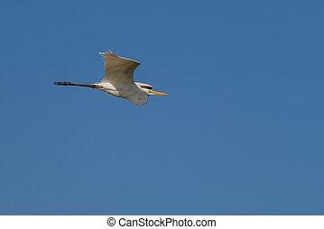 Eastern Great White Egret