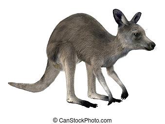 Eastern Grey Kangaroo - 3D digital render of an Eastern grey...