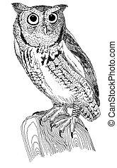 Eastern Screech-Owl - Megascops asio