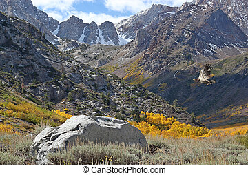 Eastern Sierra landscape with hawk - Eastern Sierra...