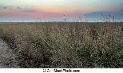 Eastern Syvash - landscape of the Eastern Syvash, Ukraine