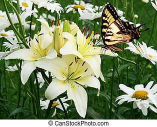 Eastern tiger swallowtail butterfly and flowers - Eastern...