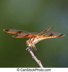 Eating a bug