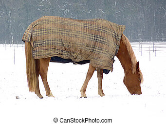 Eating brown horse in winter