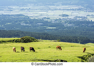 Eating cows on pasture of green highland in front of...