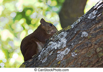 eating squirrel on a branch