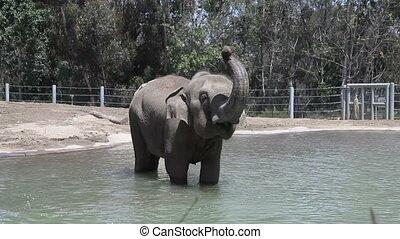 eau, éléphant, zoo