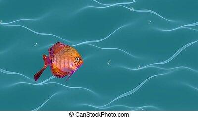 eau, animation, poisson rouge, bulles, élevage, passe-temps, fish, seamless, mer, mignon, poissons, exotique, ondulé, aquaristics, écoulement, activités, vidéo, air