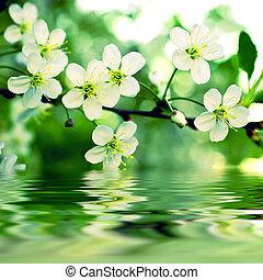 eau, apple-tree, réflexe, branche, floraison