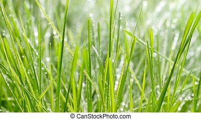 eau, arrosage, lawn., herbe, gouttes