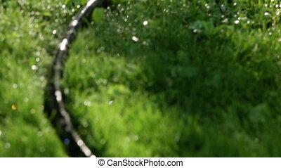 eau, arroseuse pelouse, soleil, quand, système, arbres, pulvérisateurs, grass., vert, asperger, fond, shines, herbe, jardin