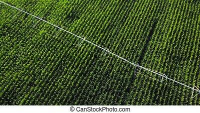 eau, au-dessus, machine, champ, irrigation, maïs