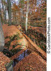 eau, automne, parc, ruisseau