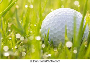 eau, balle, golf, herbe, gouttes