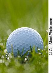 eau, balle, herbe, gouttes, golf