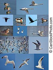 eau, beaucoup, collage, oiseaux